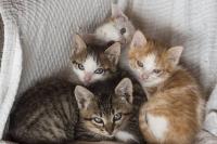 Els gats petits