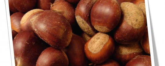 Celebrate chestnut or halloween
