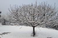 El entorno vestido de blanco