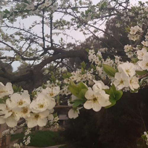 Primavera-casa-rural