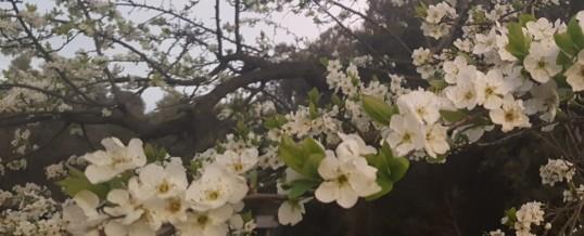 Spring color joy